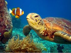 Awesome Beauty Of Underwater in CaribbeanAwesome Beauty Of Underwater in Caribbean