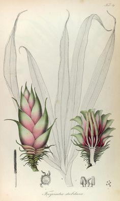 1835-48.t. 1 - Rumph