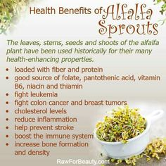 Health benefits alfalfa sprouts