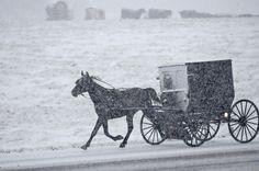 Maysville, Stati Uniti    Una famiglia amish va verso la chiesa sotto la neve a Maysville, Kentucky.  (AP Photo/The Ledger Independent, Terry Prather)