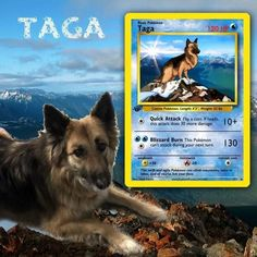 Artist Illustrates Pets Into Pokemon Cards And They Look Absolutely Adorable Pokemon Trading Card, Pokemon Cards, Trading Cards, Custom Cards, Card Games, Pets, Illustration, Artist, Animals