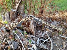 Shotgun Camo Dipping in Mossy Oak Shadow Grass Blades Film