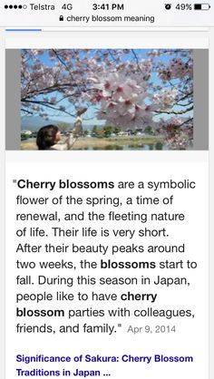 Cherry blossom meaning