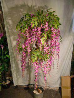 DSCF4713 Plants, Plant, Planets