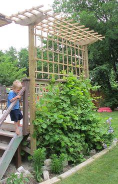 Grape Arbor Construction   DeckMan Custom Decks