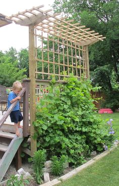 Grape Arbor Construction | DeckMan Custom Decks