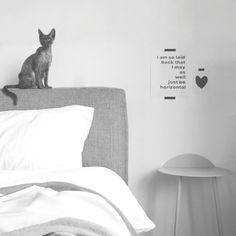 The Minimalist Home x Asher the cat