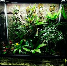 . Gecko Terrarium, Aquarium Terrarium, Paludarium, Vivarium, Green Lettuce, Moss Garden, Winter Garden, Amphibians, Gardening