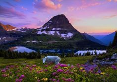 Glacier National Park, USA.