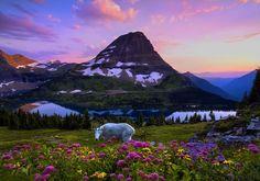 Glacier National Park, USA.