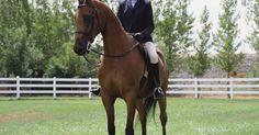 Cómo acariciar a un caballo. Los caballos son criaturas hermosas y nobles. Congeniar con ellos puede ser una experiencia enormemente emotiva. Este artículo te dará consejos sobre cómo acariciar a un caballo de forma adecuada en la que acepte y disfrute de tus afectos.