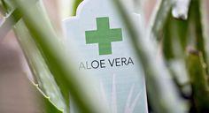 No Evidence of Aloe Vera Found in the Aloe Vera at Wal-Mart CVS