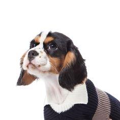 Seriously stylish people have seriously stylish pets - 本当におしゃれに気を遣う人は、ペットのスタイルにも注意を払います。#AlwaysMineMilano #fashion #cashmere #fashionista #stylish #glam #madeinitaly #milano #vogue #elle #luxury #dog #dogs_of_instagram #pets #petstagram #dogsofinstagram #instagramdogs #dogstagram #dogoftheday #dogcoat #adorable #doglover #インスタ #voguejapan