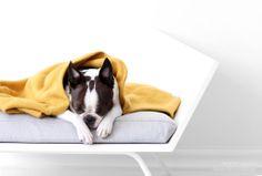 """Rekku""-dog bed  Design Päivi Sohkanen"