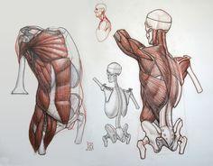 http://kylekane.com/anatomy/anatomy.html