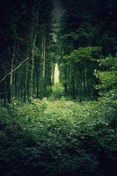 Deep In The Forest, France  photo by maxime