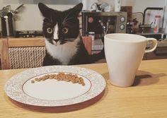 13 Tipps und Tricks, die jeder Katzenbesitzer kennen muss