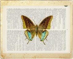 Butterfly - Yellow, Brown and Aqua butterfly printed on page from vintage dictionary via Etsy