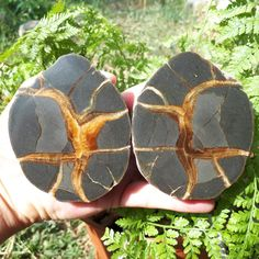 Items similar to Russian Septarian 2 Halves Healing Stones, Crystal Healing, Septarian Stone, Brown Line, Calcite Crystal, Minerals And Gemstones, Natural Shapes, Fossils, Plexus Products