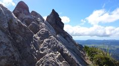 This popular walk leads to Pinnacles Hut, and on to the summit of the Pinnacles with spectacular views of the Coromandel Peninsula. It can be completed as a day or overnight walk.