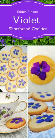 How to make lovely Violet Shortbread Cookies made with real wild Violets! http://www.downflorallane.com/make-violet-shortbread-cookies-using-real-violet-flowers/ #edibleflowers #gardenpartyrecipes