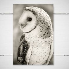 Barn Owl Photography / dreamy mysterious fantasy by BokehEverAfter, $25.00
