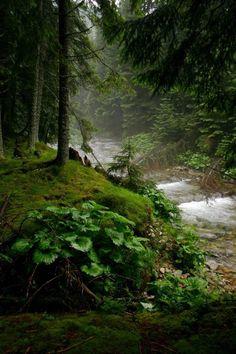 lori-rocks:  deep in the forest.. via pinterest