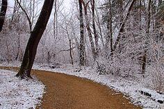 Chestnut Ridge Metro Park, January 2016