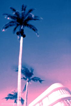 blurry neon palm tree, miami vibes