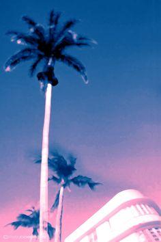 blurry neon palm tree, miami vibes