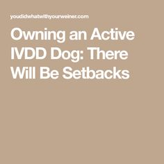 Owning an Active IVDD Dog: There Will Be Setbacks