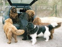 i think the car's too small for all the newfies....