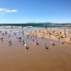 #portugal #lisbon #lisboa #gulls #birds #ocean #atlanticocean #atlantic #beach #beachlife #nature #naturelovers