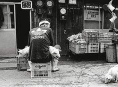 L'amitié entre un fermier et ses cochons - 2Tout2Rien