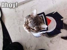 Ahoy cat | Flickr - Photo Sharing!