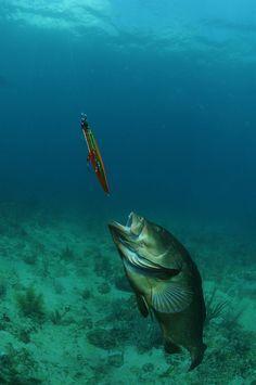 21 Best Redfish Images Saltwater Fishing Sea Angling Fishing