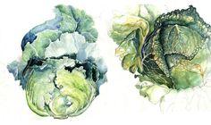 Cabbage Studies.  Beautiful colors.