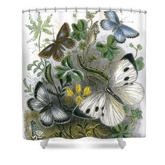 The Butterfly Vivarium Shower Curtain by English School. This shower curtain is made from polyester fabric and includes 12 holes at the top of the curtain for simple hanging. The total dimensions of the shower curtain are wide x tall. Traditional Shower Curtains, Curtains For Sale, Vivarium, Beautiful Butterflies, Fine Art America, House Ideas, Butterfly, Victorian, English