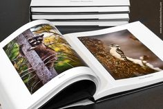 blurb book review – comparing sizes and papers | focused on light | PEI photography