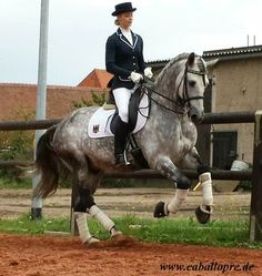Can my horse be this perfect or