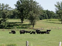 Grazers in NW WI