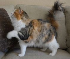 """** SCRAG TAIL: """" Pink...err, me means, Human! If yer goin' to de corners store; picks me up a can of sardines pleez!"""""""