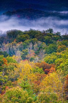 Fall Colors in the Smokies   by dfikar