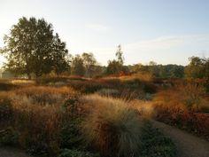 The Millennium Garden at Pensthorpe Nature Preserve in Norfolk, England, designed by Piet Oudolf.