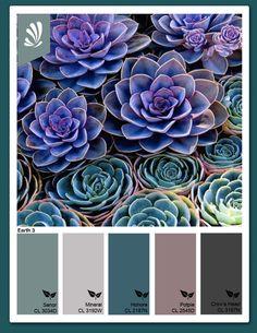 Succulent Colors