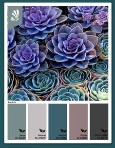 color palette...our Powder Blue, Aquarius and/or Thistle Collections would pair well with this palette.