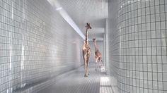 5m80 Extrait. 5m80 - Le nouveau court-métrage de Nicolas Deveaux. Produit par Cube Creative Productions & Orange, Avec la participation d'Ar...