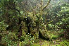 Yakushima Japan Forest