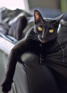 Black cat by Yuriy Angel on 500px