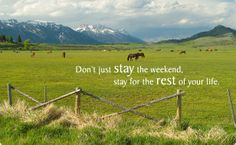 """Don't just stay the weekend, stay for the rest of your life."" #horses"